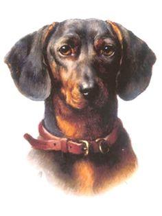 Dachshund Head Study~Counted Cross Stitch Pattern #1829~Animals Dogs Graph Chart