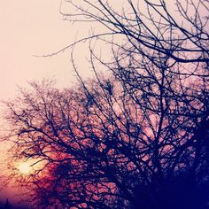 #sky #dusk #branches #sun #tiantan #beijing Tian Tan, Beijing