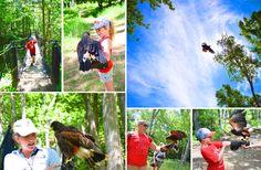 Falconry Apprentice in Tremblant = so cool!