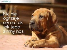 Labrador Retriever, Humor, Portal, Dogs, Quotes, Animals, Animal Pictures, Labrador Retrievers, Quotations