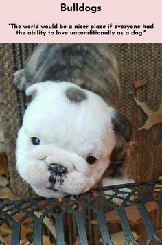 Read more about Bulldogs Simply click here for more...