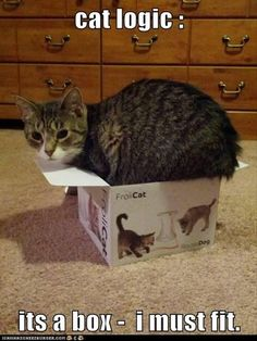 Kitty in a box.....Kitty in a box......lol right Meg & Skye?...we are singing it right now!!!