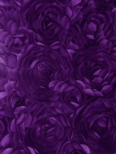 Purple                                                                                                                                                                                 More
