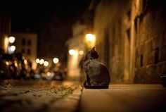 """Road Pavement Street Bokeh Lights Cat Sidewalk City Night Pictures F..."" ^**^"