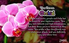 I'm a Orchid! What kind of flower are you? #ZimbioQuiznull - Quiz