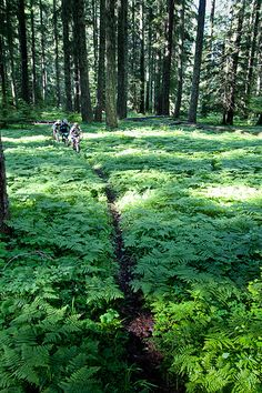 Mountain Bike Oregon | by R O'Connell
