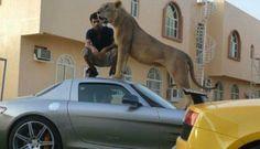 Gaya Saudagar Arab Pamer Mobil Mewah, Sambil Bawa Singa | Beritasejagat.com