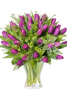 FIALOVÉ TULIPÁNY Tulips, Flowers, Plants