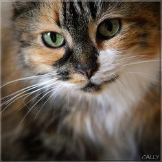 """""""A cat really is the most beautiful woman in the room."""" --E V Lucas"""