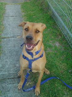 Nervous Friendly Dog Collar