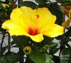 Flor del pacifico