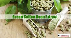 does green coffee bean extract actually work