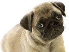 CachorrosBlogs.: Depressão em Cachorros.