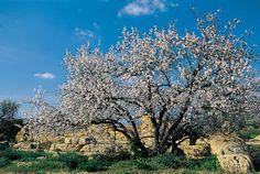 Bentornata, Primavera! #Sicilia #CheSpettacolo! Welcome back, Spring! #Sicily #WhatAShow!
