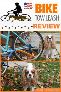 I am really impressed with the Bike Tow Leash and the ease of use and quality. It is definitely a product I can recommend to dog training clients and friends, especially for active dogs and active families. Dexter and I will continue to use the Bike Tow Leash, but because of Dexter's limitations, we will be keeping a slow pace and short rides. He did enjoy it, so it will come out again this spring. #sponsored: