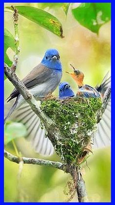 AMAZING BIRD `s -- bird's-nest #500px.com -- palaree thongkwan