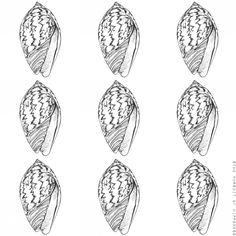 Seashells 4 Cone Snail- Pen Illustration