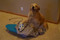 Who says dogs can't do chores
