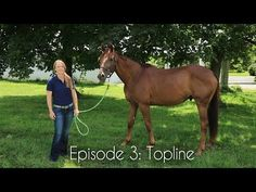 Building a Better Topline - Horse Collaborative
