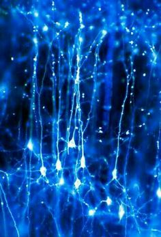 Neurons in the brain Credit: Dr Jonathan Clarke. Pyramidal neurons forming a network in the brain. These are nerve cells from the cerebral cortex that have one large apical dendrite and several basal dendrites. Brain Neurons, Cerebral Cortex, Rhapsody In Blue, Fotografia Macro, E Mc2, Brain Activities, Science And Nature, Life Science, Brain Science