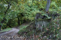 Castione di Brentonico Sentiero dei Castagneti