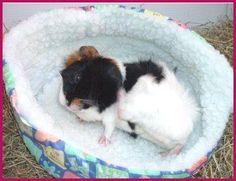 Guinea Pig Toys/Home Comforts