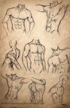 Male Body Sketches by Vinnie14 on deviantART:
