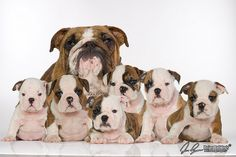 OMG I want them all...LOL Here;s Latifa and puppies