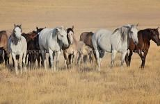 Update: Wyoming Checkerboard Lawsuit Hearing & Ruling | American Wild Horse Preservation Campaign