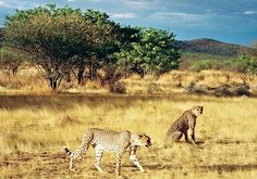 Natural Beauty in South Africa ~~ Great list to check out if headed to the region.