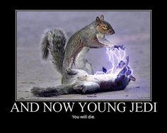 Sith-Hörnchen