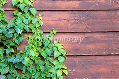 古い塀とツタ 写真素材