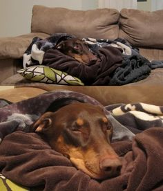 Either of these precious babies could be my Aires on any given day. Being cuddled up in a blanket is his favorite thing.