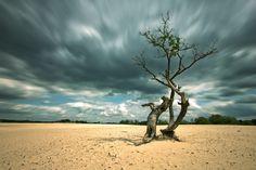 Art-tree by Eimar Kranendonk on 500px