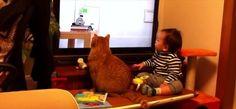 【タイミングがピッタリ】ピタゴラスイッチを見ているネコと赤ちゃんの動きが絶妙過ぎる - http://naniomo.com/archives/5101