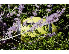 Roe Ethridge Andrew Kreps Gallery Football and Lavender, 2013