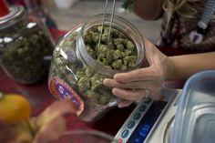 6 preguntas sobre la industria del cannabis medicinal en Puerto...