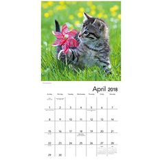 So sweet! Buy your 2018 Kittens calendar from Purrfect Gifts Online today! Cat Calendar, Kitten Love, Adorable Kittens, Mead, Online Gifts, Space, Cats, Sweet, Animals