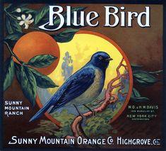 'Blue Bird' - illustrated #vintage Californian #fruit #label #packaging