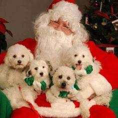 imagens sobre o Natal