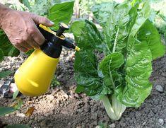 Organic Gardening Near Me Gardening Direct, Organic Gardening Tips, Planting Vegetables, Organic Vegetables, Agriculture Bio, Vegetable Garden Design, Vegetable Gardening, Plant Nursery, Green Life