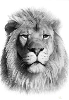 . Lion King Art, Lion Of Judah, Lion Art, Tattoo Reggae, Animal Sketches, Animal Drawings, Lion Tattoo Sleeves, Lion Sketch, Lion Photography