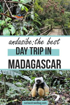 Andasibe National Park makes for the perfect day trip from Antananarivo, the capital. If you are looking to see lemurs, chameleons, and more, this is a great place for a quick hike to see the wildlife of Madagascar. One Day Trip, Day Trips, Madagascar Travel, Zanzibar Beaches, Animal Experiences, Africa Destinations, Short Trip, Africa Travel, Travel Couple