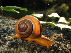 Les escargots contribuent à la sauvegarde du monde végétal