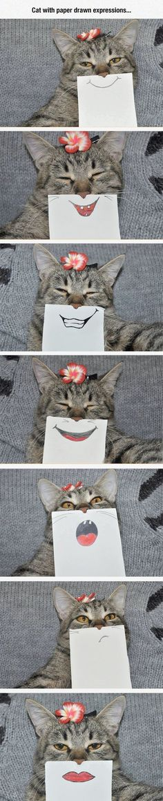 Look what I found -> Funny Cat Photoshop Pictures ;D