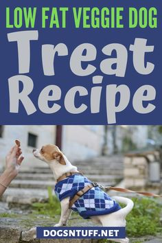 In this article, we're going to share with you how to make a homemade vegetarian dog treat. #veggiedogrecipe #dogfood #dogrecipes Dog Treat Recipes, Dog Food Recipes, Carrot Dogs, Veggie Dogs, Dog Facts, Dog Rules, Dog Biscuits, Dog Behavior, Dog Training Tips