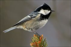 Vtáky Slovenska