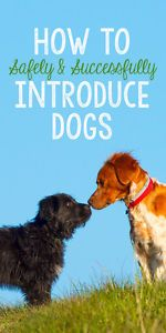 Because, like humans, not all dogs are instant friends, it's important that those introductions be carried out safely and in a controlled environment. Done properly, an introduction between two dogs, even if they don't seem to get along at first, can lead to a lifelong, harmonious friendship.