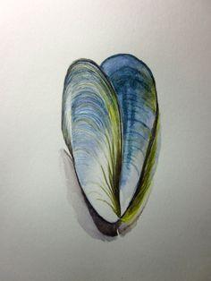 Mussel shell original watercolour pencil drawing by AnneLawsonArt Watercolor Ocean, Watercolor Pencils, Watercolor Paintings, Watercolours, Pencil Drawings, Art Drawings, Shell Drawing, Sea Life Art, Painted Shells