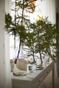 Simple Christmas decorating: throw various evergreen branches into various glass jars. Would be extra pretty with white lights! Even a few decorations!